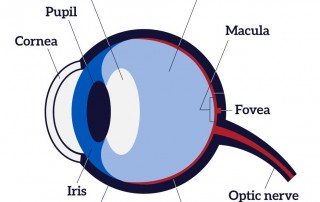 iris recognition vs. retinal scans